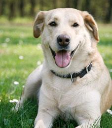 dog_pic